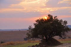 African sunset (stevelamb007) Tags: africa sunset sky cloud tree southafrica evening nikon silverlining d90