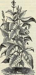 Anglų lietuvių žodynas. Žodis cassia marginata reiškia kasijos marginata lietuviškai.