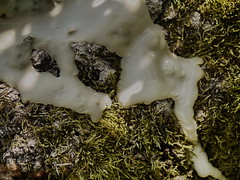 My Planet - The Creation Day 1 ~ Mein Planet - Die Schpfung Tag 1 - Detail: Moos auf umgestrztem Baum in der Lobau ~ The World as Atelier ~ Die Welt als Werkstatt (hedbavny) Tags: vienna wien wood light shadow white plant green art nature creativity austria licht milk sterreich moss globe outsiderart kunst au natur pflanze creation naturism planet latex grn holz schatten baum fkk deadwood imprint moos aktion nudism milch conceptualart globus urwald weis schaffen schpfung kreativitt kaisermhlen abdruck umgestrzt lobau freikrperkultur abbild umgefallen maigrn totholz naturismus aktionismus auwald schpfen erschaffen hedbavny ingridhedbavny