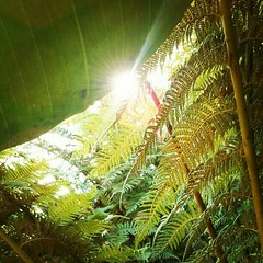 Afternoon Oasis (PamelaReneInnis) Tags: sanfrancisco goldengatepark nature sunflare