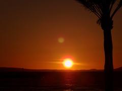 Balares (caro71135) Tags: mer soleil coucher ciel silence soir crpuscule nuit palmier calme coucherdesoleil majorque