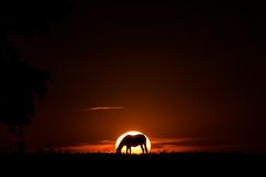 Cae el Sol (emiliokuffer) Tags: sunset horse sun sol caballo atardecer countryside farm momento campo moment