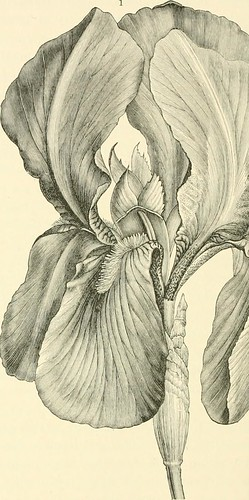 """Image from page 263 of """"The natural history of plants, their forms, growth, reproduction, and distribution;"""" (1902)"""