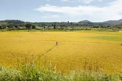 26 April, 10.52 (Ti.mo) Tags: africa 2 field rural landscape iso100 rice mg april madagascar f28 2014 moramanga toamasina 0ev  secatf28 ef40mmf28stm