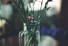 Carnation in a beer mug (Andrey Timofeev) Tags: flowers light stilllife color reflection film home glass analog 35mm table photography focus mood alone colours shadows little russia bokeh room small grain atmosphere shades stems bouquet manual expired tones canonae1program carnations expiredfilm          smalldof    smalldepthoffield    35  kodakcolorplus200         canonlensfd50mm14 februarymarch2014 developbefore122008 carnationsinabeermug