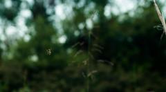 Little Weaver (severalsnakes) Tags: insect spider pentax zoom missouri manual sfcc kalimar sedalia k30 statefaircommunitycollege pentaxforums kalimar288535