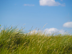 Blowin' in the Wind (Alexander Jones - Documentary Photography) Tags: blue sky cloud west green grass wales clouds port landscape photography carmarthenshire wind south documentary windy olympus nofilter burry e500