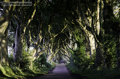 The Dark Hedges (C.M_Photography) Tags: road old morning trees ireland light forest dark years 300 beech hedges antrim intertwined armoy darkhedges bregagh