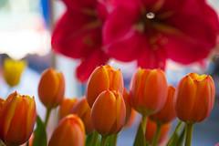 Sunset tulips (Sergio  Bruno) Tags: flowers flores flower color primavera amsterdam museum bulb spring tulips colorfull flor colores tulip bulbs prinsengracht bouquet ramo colorido bulbo tulipan bulbos tulipn tulipanes