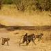 African safari, Aug 2014 - 010