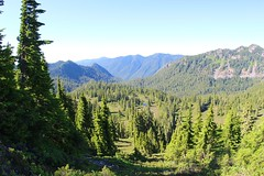 So many pine trees, so more to do (daveynin) Tags: mountain nps sightseeing trail olympic deaftalent deafoutsidetalent deafoutdoortalent