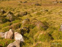 Alpine Tundra (timtanner72) Tags: alaska naturephotography hatcherpass independencemine hummocks alpinetundra independenceminestatehistoricalpark alaskalandscape alaskastateparks alaskaphotography alaskahiking alaskatrails tundralandscape hatcherpasshiking hatcherpasstrails hatcherpassfall independenceminehiking alaskahistoricalpark