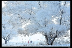 nEO_IMG_DP1U5568 (c0466art) Tags: world china trip morning travel trees light white snow cold ice beautiful weather canon river landscape island boat scenery very province 2014  1dx  c0466art