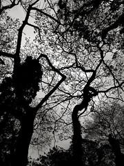 ( mnen barn ) Tags: black cemetery dark death darkness cross gothic angels