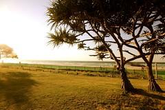 sunset @ coolangatta (ahnjkris) Tags: trees sunset beach australia qld 1020mm sigma1020mm 650d canon650d