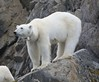 """28 Raudfjorden, Svalbard 2014 • <a style=""""font-size:0.8em;"""" href=""""http://www.flickr.com/photos/36838853@N03/15083590946/"""" target=""""_blank"""">View on Flickr</a>"""