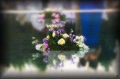 Daintiness (Alessandro Giorgi Art Photography) Tags: flowers wedding roses italy flower reflection nature water pool rose mirror bride petals nikon couple italia married spouses piscina colored bouquet fiori festa fiore acqua petali colori marry matrimonio sposa specchio coppia sposi cerimonia cerimony delicato delicatezza daintiness raffinatezza d7000