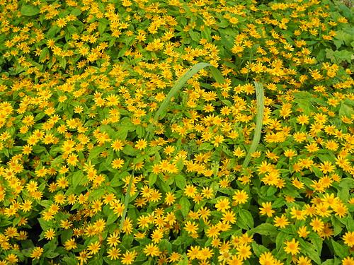 Monet's Garden-P8270815