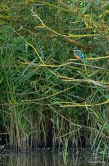 IJsvogel (Travel4Two) Tags: flevoland almere c1 s0 5000k lepelaarplassen adl2 lepelaarhut