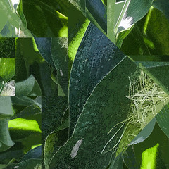 A-Maize (Explored) (Osohepi) Tags: abstract green nature leaves composite corn cornstalks botanic flowersplants cornsilk summeraugust cornleaves graphicrendering abstractfromreal graphicfromreal designingreen graphicfromnature