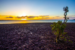 Sunset at Wellington Point by low tide (f.rohart) Tags: ocean sunset canon australia wideangle australie canon1022mm wellingtonpoint 550d