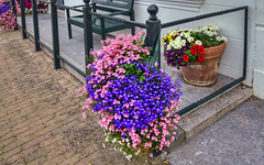 Blumen (Tatjana_2010) Tags: blumen blüten farbenpracht