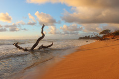 Nukoli'i Beach Sunrise (russ david) Tags: nukolii beach sunrise kauai september 2016 hi hawaii pacific ocean ハワイ 風景 coast sand sea shore water landscape sky