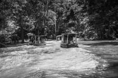 Afluentes do Solimões (felipe sahd) Tags: riosolimões amazonas amazônia floresta barcos brasil pessoas 123bw noiretblanc