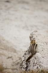 Yosemite'14 (marcosizt) Tags: california nationalpark squirrel yosemite