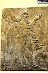 Wall Reliefs, North West Palace of Ashurnasirpal II (Assyria, Babylon, Akkad, Sumer...) Tags: spirit sage ii protective assyria assyrian ashurnasirpal neoassyrian humanheaded kalhu northpalace apkallu numrud birdheaded mullilu