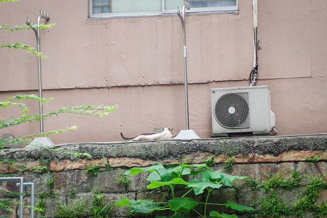 Today's Cat@2014-07-02