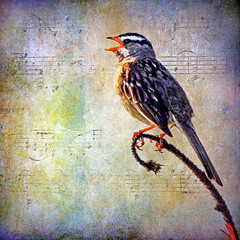 she sings away   (1crzqbn **away**) Tags: sunlight color bird nature square textures sparrow hss 1crzqbn sliderssunday shesingsaway