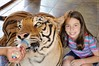 Tigres (Keli Gorgulho) Tags: felinos tigres medo mamadeira maringá keligorgulho mantenedouro criançacomtigre mantenedouroarymarcos arymarcos tigredan