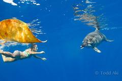 the leaf game (Todd Aki) Tags: dolphin kealakekua