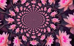 Royal Pink Kaleidscope (maf04) Tags: flower nature drops lotus digitalart kaleidscope
