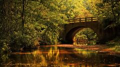 Gulpha Gorge (AlyKPhoto) Tags: bridge green nature water creek arkansas forge