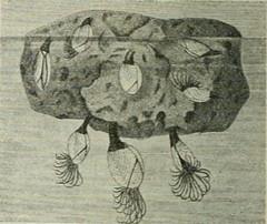 """Image from page 61 of """"Tietosanakirja"""" (1909)"""