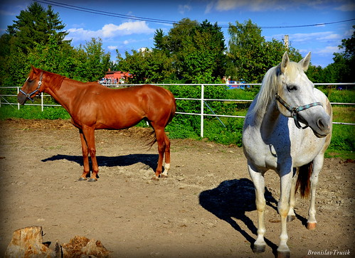 Two horses are always better than one :)
