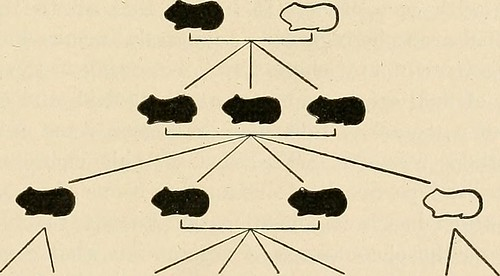 "Image from page 526 of ""Preventive medicine and hygiene"" (1917)"