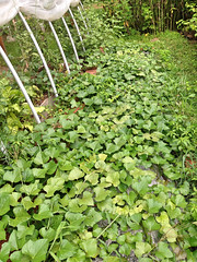 """The Sweet Potato Patch • <a style=""""font-size:0.8em;"""" href=""""http://www.flickr.com/photos/54958436@N05/14784600550/"""" target=""""_blank"""">View on Flickr</a>"""