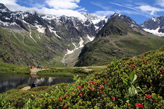 Lac du Lauzon (Hautes-Alpes) (rogermarcel) Tags: flowers lake mountains alpes landscape lac paysage montagnes rogermarcel