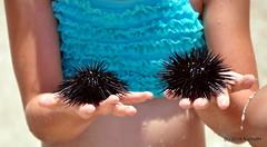 DSC_0545 (rachidH) Tags: sea nature island mediterranean hellas greece kefalonia seaurchin oursin karavomylos paracentrotuslividus hrissonsdemer chtaignesdemer rachidh