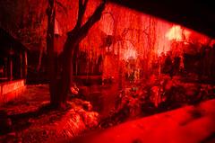 SJR_2019a (Scott Whiteman) Tags: gardens landscape nikon chinese sydney peaceful nikonlife d7000 tokina1116mmf28