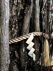 Sacred (Rekishi no Tabi) Tags: tree japan kyoto sacred shinto kibune sacredtree