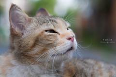 Ndud (Rama N) Tags: animal cat canon indonesia yogyakarta raman canon24105l canon1000d ramanphotography