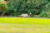 _DSC1618.jpg (orig_lowolf) Tags: usa dog oregon nikon flickr lakeoswego georgerogerspark d300s sigmaaf150500mmf563apodgoshsm