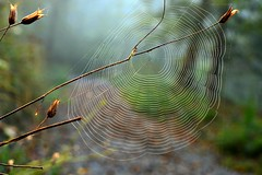 Morning Walk (balu51) Tags: herbst september spinnennetz 2014 morgenspaziergang herbstmorgen tobel