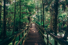 Silver Springs State Park (J. Parker Natural Florida Photographer) Tags: statepark trees silversprings wild tree green forest woods nikon florida hiking palm trail jungle shade swamp boardwalk wilderness d90 wildflorida nikond90 vsco vscofilm
