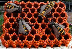 Orange (_Asphaltmann_) Tags: orange bees bienen pentaxlife justpentax