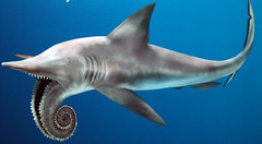 fossil shark reconstruction permian helicoprion